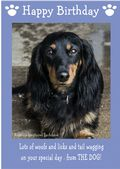 "Miniature Long Haired Dachshund-Happy Birthday - ""From The Dog"" Theme"